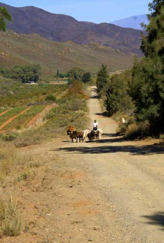 Sheep-on-the-farm