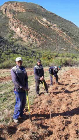 30-Planting-new-Orchards-at-Tierhoek